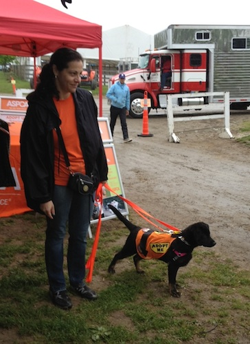 The ASPCA Adoption Van will visit the horse show on Sunday, May 18.