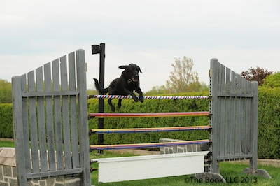 The Canine Puissance classes are always fun to watch.