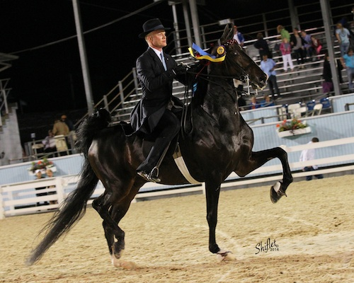 Five-Gaited Saddle Horse Stake winner Smith Lilly and Central Perk. Photo by Doug Shiflet