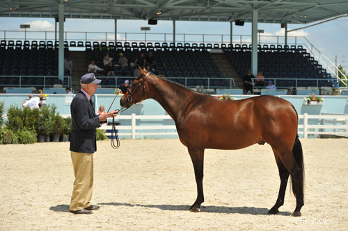 Best Young Horse Rainier with Kenny Wheeler. The Book LLC
