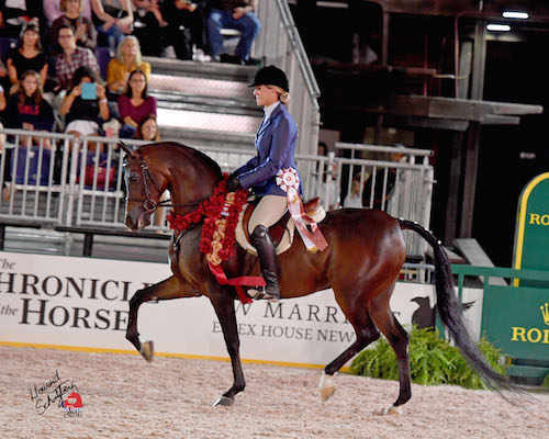 Katie Russell flew in from California with her horse Ariya Encore  to compete at the RCPHS for the first time this year.